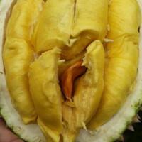 durian-bawor-kaki-ganda