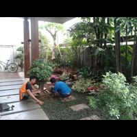 tanaman-hias-pengganti-rumput-indoor