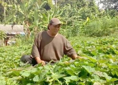 Sang petani Yg Bisa Bercocok tanam, Ajaib