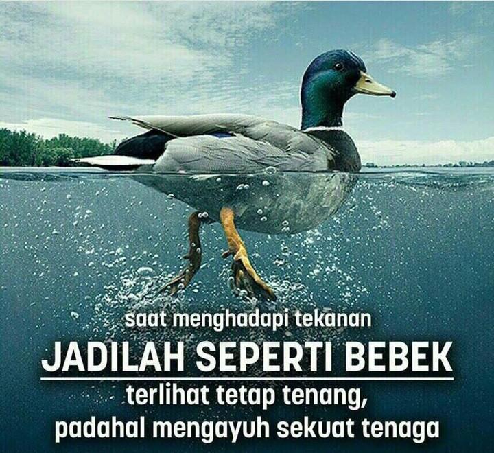 Jadilah seperti bebek