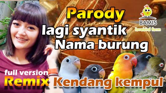 parody remix lagi syntik versi nama burung lovebird