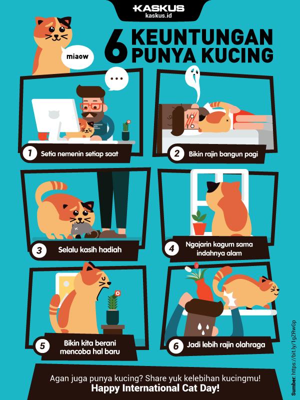 6 Keuntungan Punya Kucing