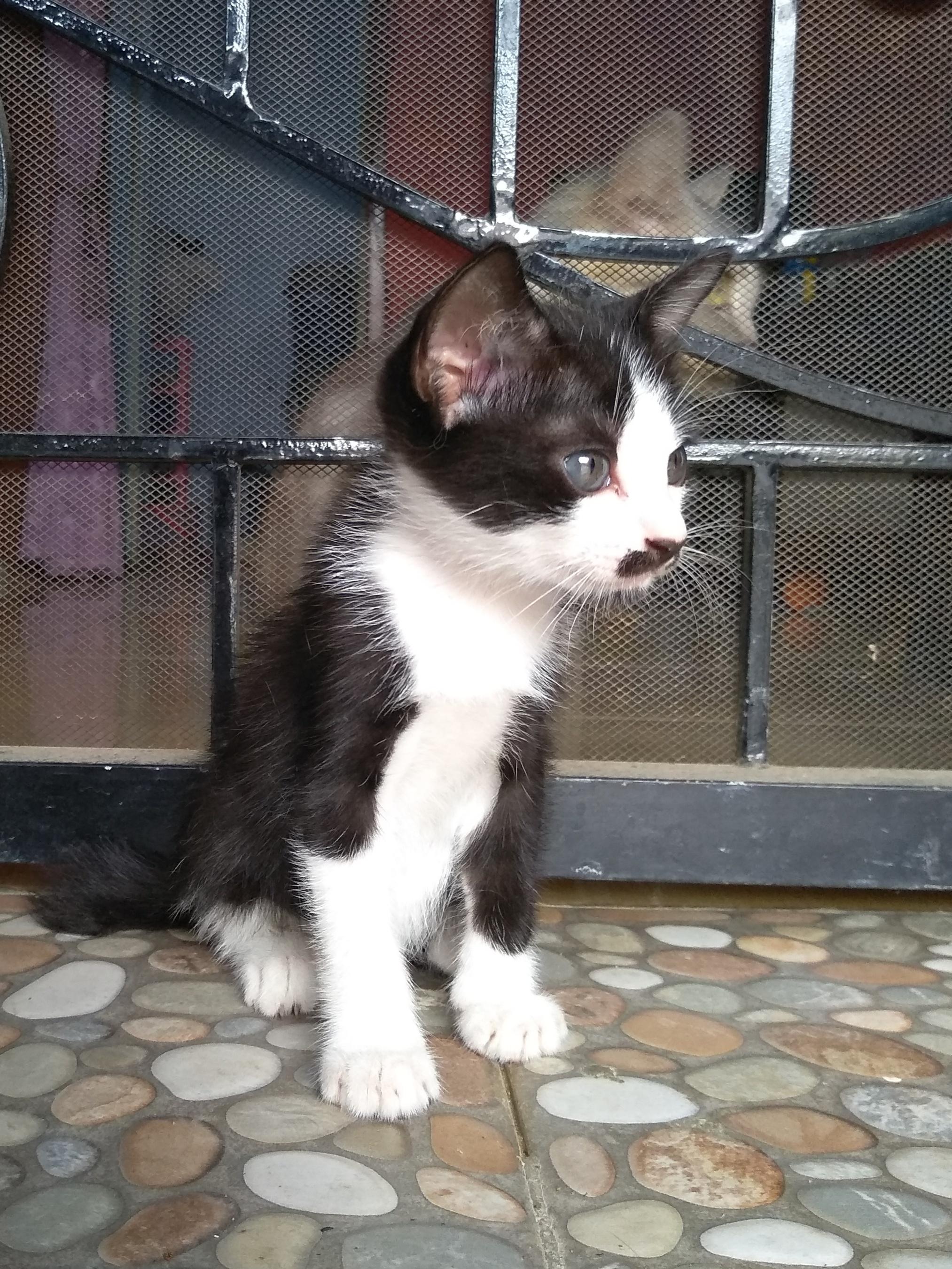 Kucing Kampung Kaskus