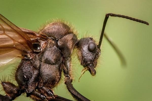 Ini Semut Loh Gan
