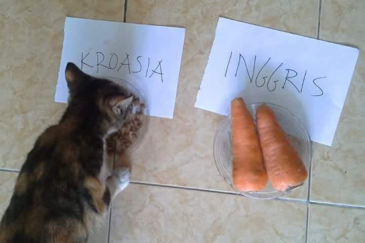 Kucing peramal
